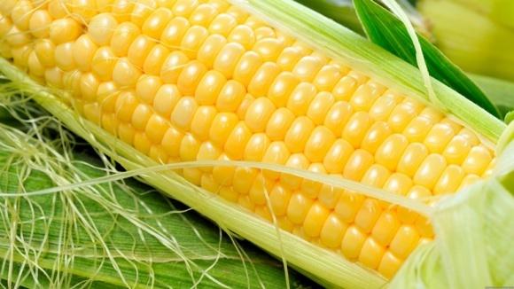 Контроль сорняков и болезней на кукурузе баковыми смесями фото, иллюстрация