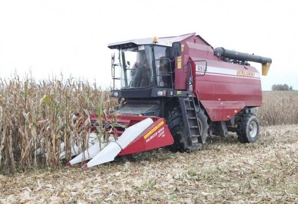 Коли кукурудза «кидається» качанами фото, ілюстрація