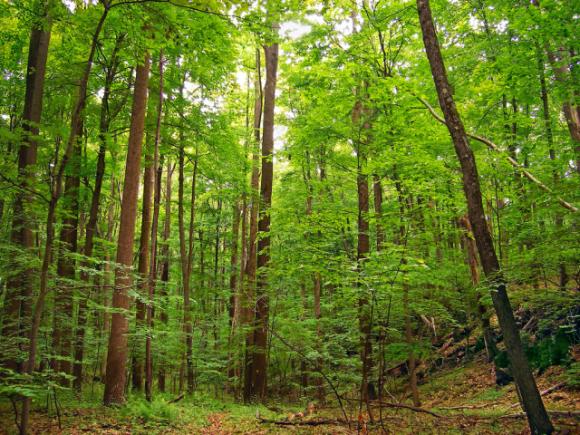 Селянський ліс: можливості та реалії фото, ілюстрація