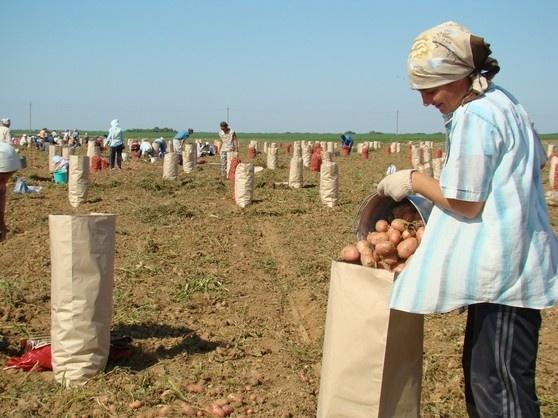 Хто в Україні займається фермерством? Статистика і проблеми фото, ілюстрація