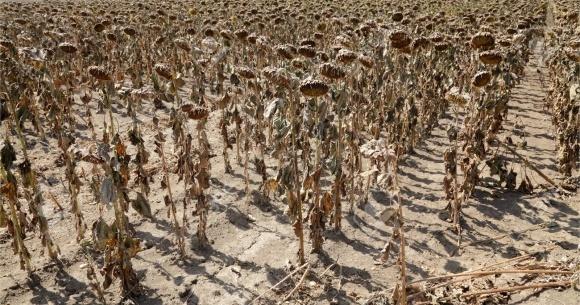 Непридатні ґрунти ОАЕ використовуватимуть для вирощування овочів-галофітів фото, ілюстрація