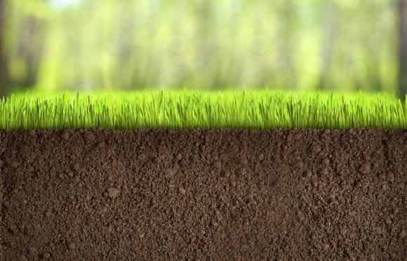 Ціна 1 га землі в Україні має становити 400-600 дол. фото, ілюстрація