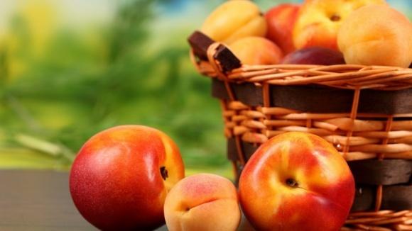 Україна втрачає можливість вирощувати абрикос та персик, на черзі - черешня, - FАО фото, ілюстрація