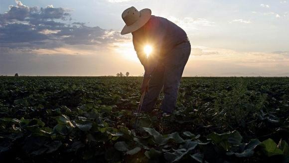 Держпідтримка фермерства: перспективи для фермерів і вигода державі фото, ілюстрація