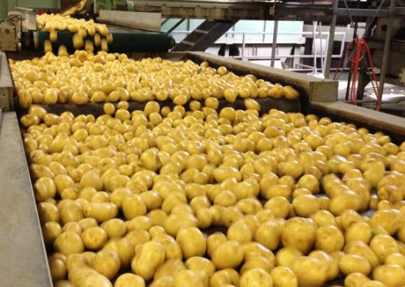 Яку додаткову вартість із гектару може принести переробка картоплі? фото, ілюстрація