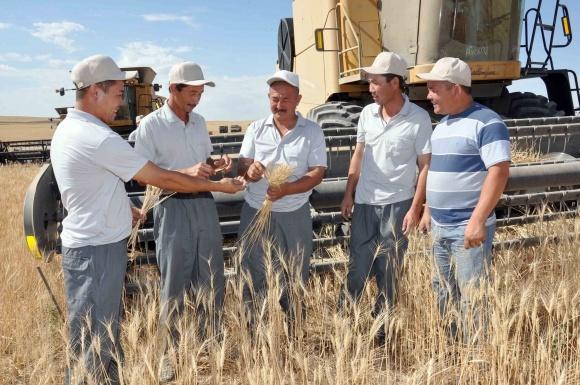 Казахстан хоче замінити субсидії АПК доступними кредитами фото, ілюстрація