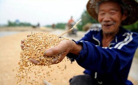 Україна планує відкрити пшеничний ринок Китаю і В'єтнаму фото, ілюстрація