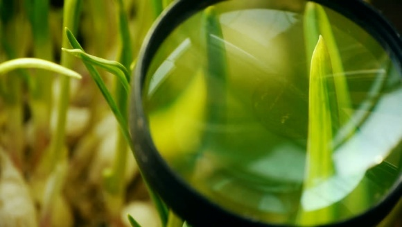 Агролайфхак: підвищення якості обробки пестицидами та зрошення по-ізраїльськи фото, ілюстрація