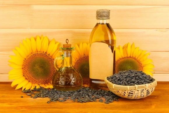 Україна збільшує виробництво високоолеїнового соняшника фото, ілюстрація