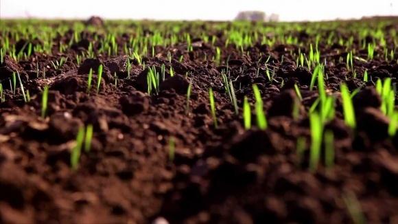 Держспоживслужба нагадала про необхідність передпосівної обробки насіння фото, ілюстрація