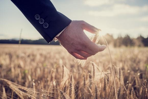 В Україні зростає попит на індексне страхування для аграріїв фото, ілюстрація