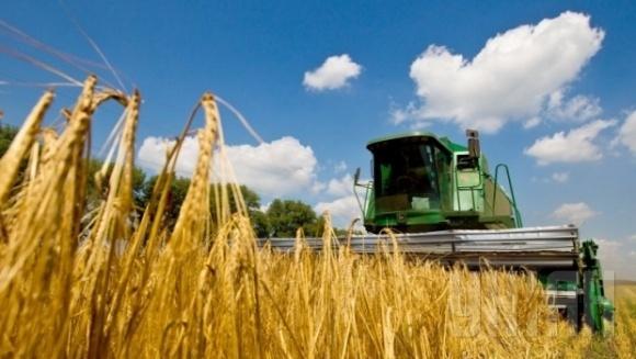 В Україні намолочено понад 300 тис. т зерна нового врожаю фото, ілюстрація
