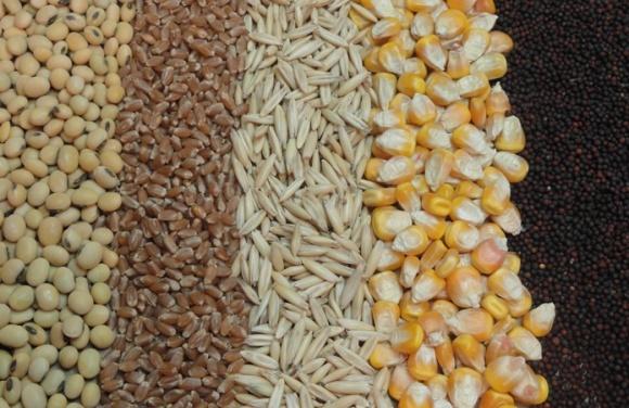 Виробництво зернових і зернобобових у 2017 році скоротиться фото, ілюстрація